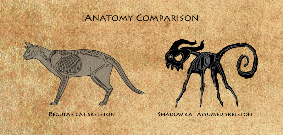 Anatomy comparison. Shows how the anatomy of the Shadow Cat is completely unrealistic.