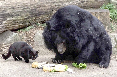 Cat and Bear share food